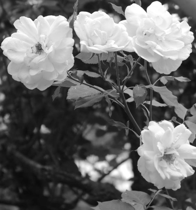 springtime 058