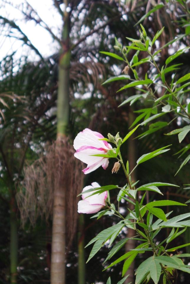 springtime 080
